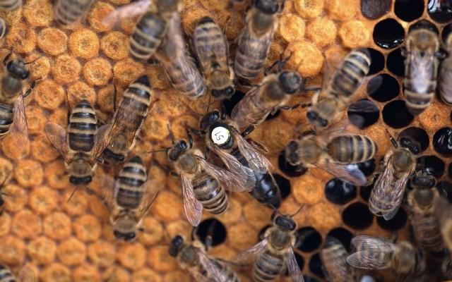 Taniec z przesłaniem: dowiedz się jak pomagać zagrożonym pszczołom!