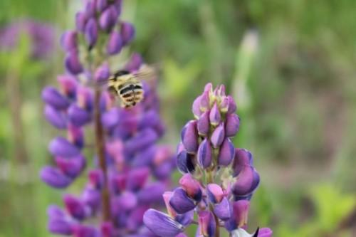 Pomóżmy pszczołom znaleźć pożywienie!