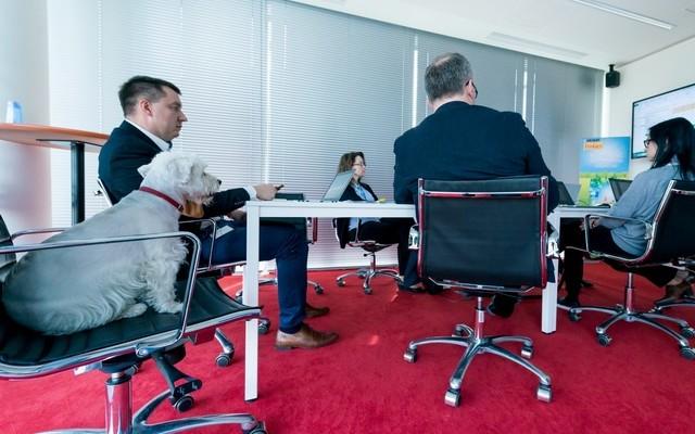 Pets@work – czyli jak się pracuje z psem w biurze