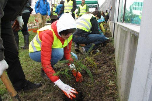 Kraków: tyle nowych drzew, ilu pracowników