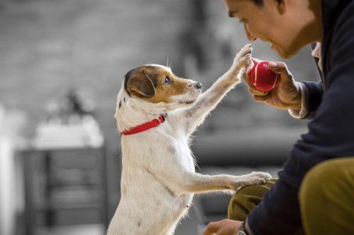 CSR powinien zejść na psy