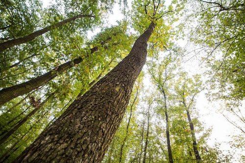 Na redukcji emisji CO2 skorzysta środowisko i biznes