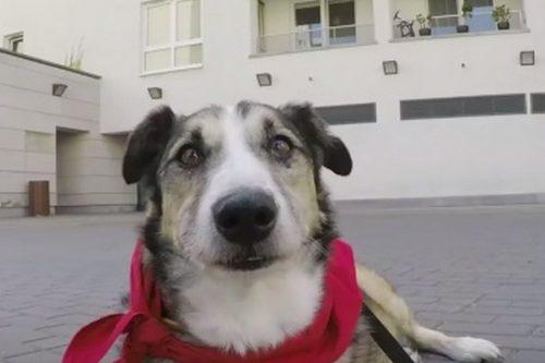 Carrefour Polska zachęca do odpowiedzialnej adopcji psów