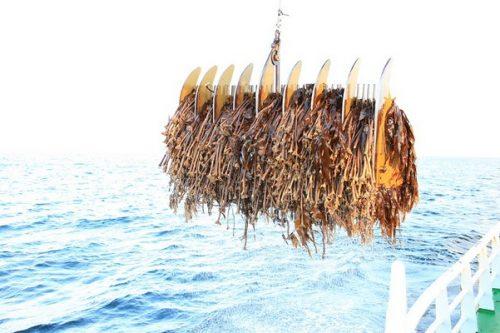 Nowy program na rzecz ochrony oceanów
