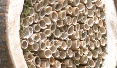 dom dla pszczół